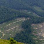 Зеленський підписав закон про заборону суцільної вирубки в Карпатах