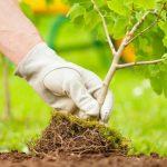 В Україні за один день висадять 5 мільйонів дерев